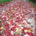 "Crimson leaves carpet the road to Betty Neice Slone and the late Emil Slone's place on ""top of the hill"" at Caney Mountain."
