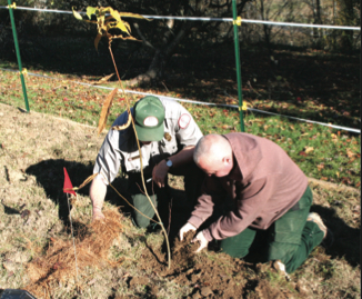 American Chestnut trees planted at Carr Creek Lake